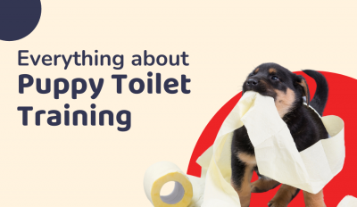Everything About Puppy Toilet Training