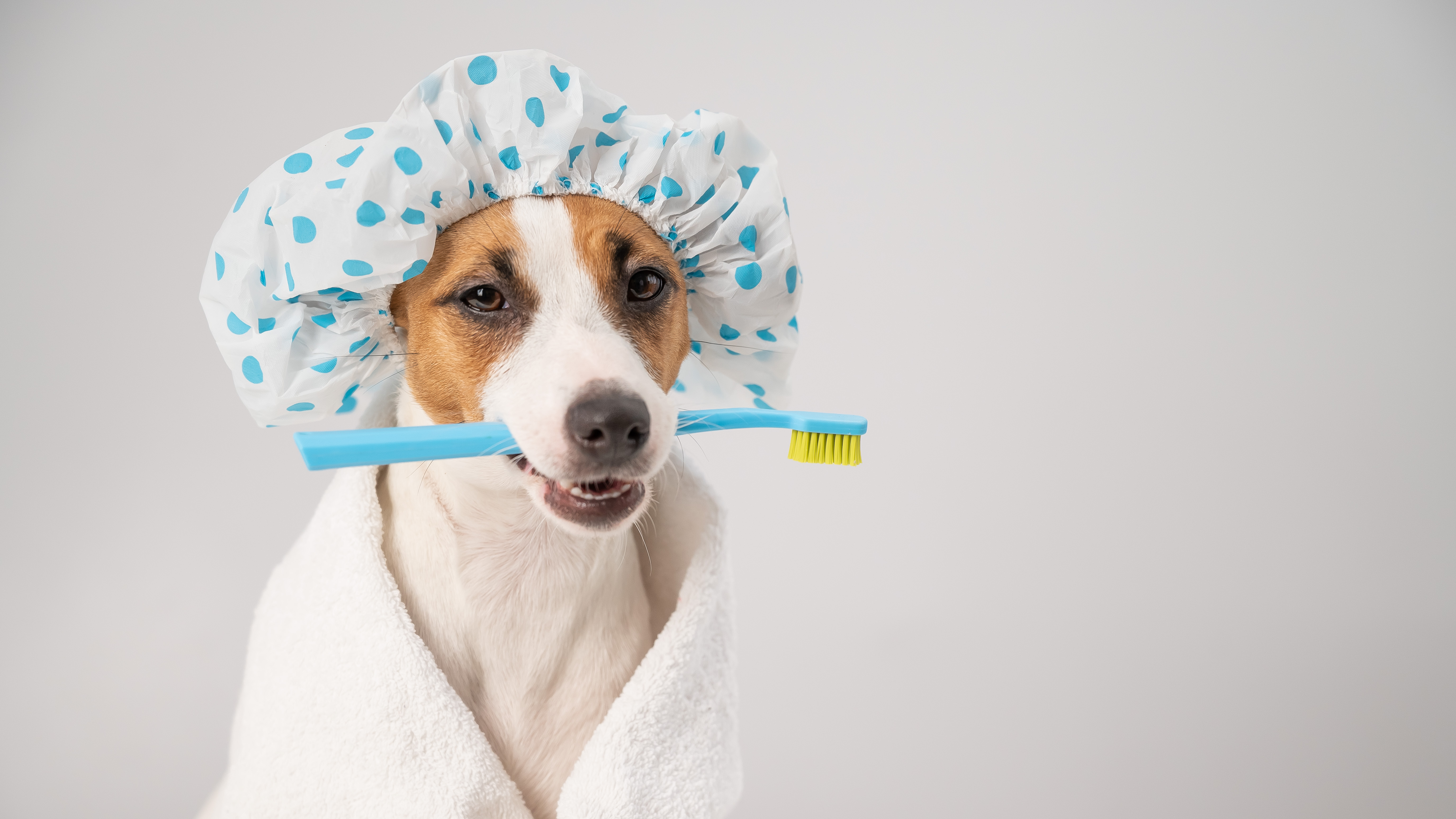 Puppy getting ready for its first bath with a shower cap and a tooth brush